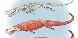 Phát hiện mới về cá sấu khổng lồ từng ăn thịt khủng long